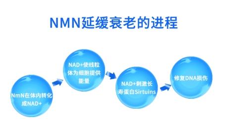 抗衰老市场新贵 深度解读金达威NMN